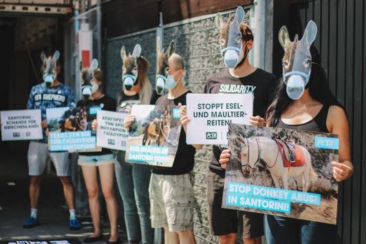 Bildmaterial von weltweiten PETA-Appellen an die griechische Regierung: Esel- und Maultierreiten auf Santorini muss verboten werden!