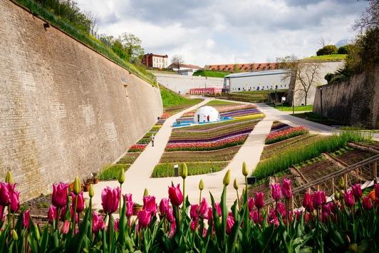 Erfurter Gartenschätze