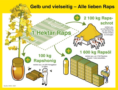 Honigbienen fliegen auf Raps