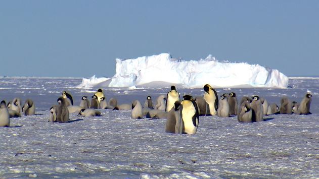 """""""wissen aktuell: Das Eis schmilzt"""": 3sat-Wissenschaftsdoku zu Klimawandel in Polarregionen"""