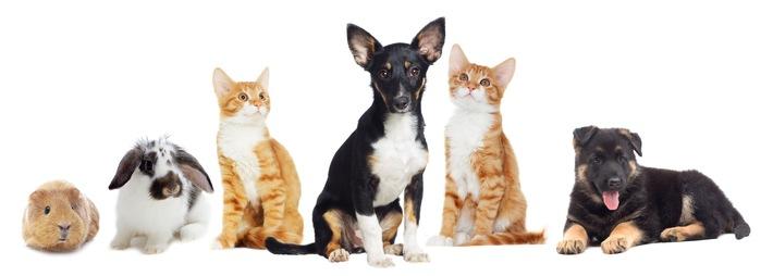 Tierischer Familienzuwachs: Gekommen, um zu bleiben / Jedes Jahr denken Menschen gerade zum Weihnachtsfest über einen tierischen Familienzuwachs nach