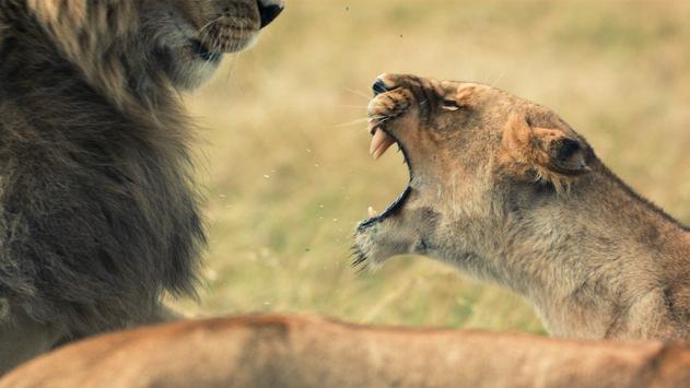 Brandgefährliche Begegnungen: National Geographic WILD begegnet im Mai den tödlichsten Jägern der Tierwelt