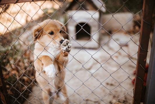 Import von Hunden – Tierschutz oder Geschäft? / Julia Klöckner mahnt: Tiere gibt es nicht zum Schnäppchenpreis