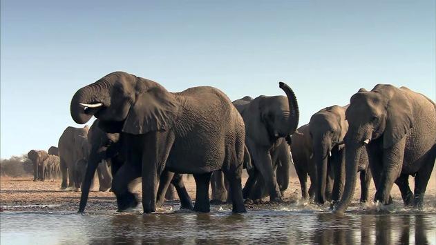 Bibel TV zeigt beeindruckende Naturdokumentationen aus dem Reich der Wildtiere / Ab 6. Januar sendet Bibel TV drei hochwertig produzierte Tierdokumentationen – jeweils mittwochs um 20.15 Uhr