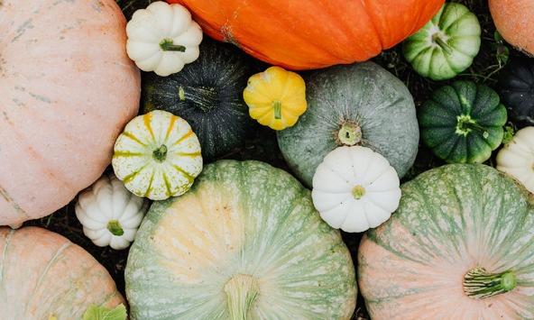 Herbstsaison ist Gemüsesaison