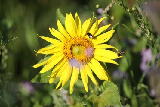 """""""Mach mit! Lass Blumen blühen!"""" / Flower-Power für mehr Insekten-Power"""