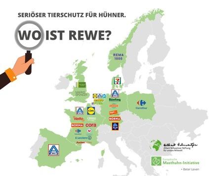 Hunderttausend fordern Tierschutz von Rewe, Europas Supermärkte machen es vor