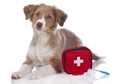 Für den Notfall gut gerüstet / Für kleine Wehwehchen oder akute Notfälle gibt es die Haus- und Reiseapotheke / Solch ein Erste-Hilfe-Set ist auch für vierbeinige Familienmitglieder eine gute Sache