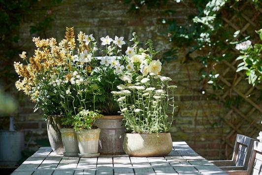 Sommer, Sonne, Pflanzen-Wonne / Drei Tipps für einen wunderbaren Sommer im eigenen Outdoor-Bereich