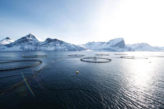 Gesund und lecker: Norwegischer Zuchtlachs ist Testsieger bei Stiftung Warentest
