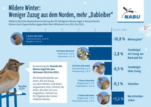"""NABU: Wenig Meisen, aber viele Spatzen gezählt / """"Stunde der Wintervögel"""" übertrifft Teilnahmerekord von 2020 um 65 Prozent"""