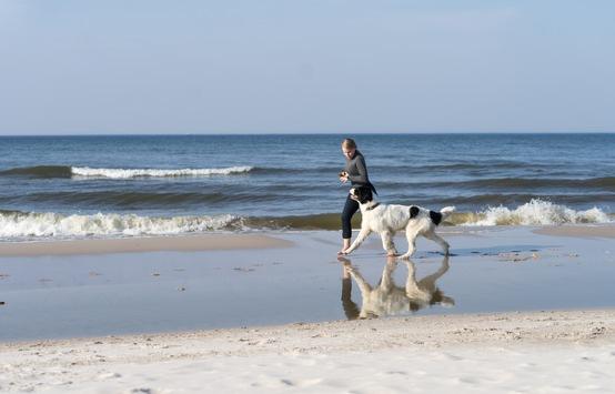 Reisen mit dem Hund: Tipps für eine gute Fahrt / Reisen ist für den Hund oftmals mit Stress verbunden – Die hundegerechte Urlaubsplanung macht es Mensch und Tier leichter