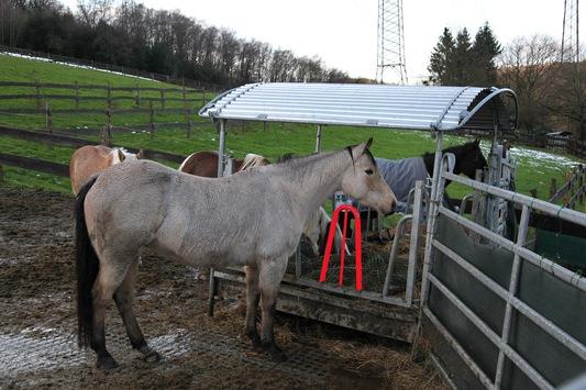FW-E: Tierrettung in Essen-Kupferdreh, 18 Jahre alte Stute mit Hufen in Futterraufe verklemmt