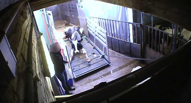 Nach schlimmsten Tierschutzskandal Deutschlands / Prozess: Tierschutz fordert endlich harte Strafen gegen Tierquäler / Protestaktion am Freitag vor dem Gericht / Tierschützer fordern Gefängnis