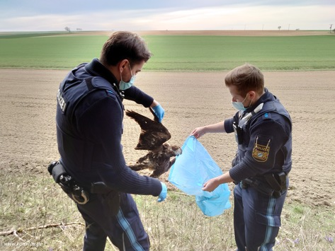 Artenschutzkriminalität in Bayern: Behörden gehen verstärkt gegen Vogel-Wilderei und illegalen Handel mit Trophäen und Federn vor – Mehr als 185 registrierte Fälle seit 2010