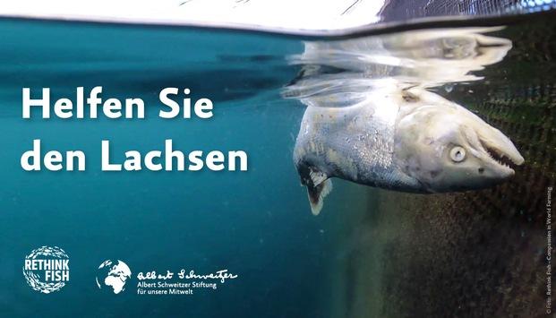 Verstümmelungen, Seelaus-Befall und hohe Sterberaten: Neue Undercover-Recherche enthüllt die dunklen Abgründe einer der größten Fischzuchtindustrien der Welt