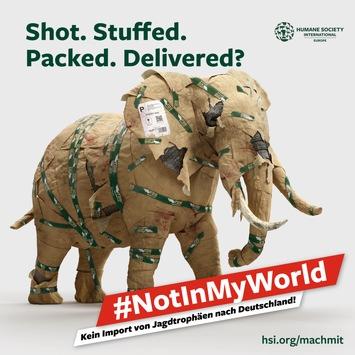 HSI/Europe startet Kampagne für Einfuhrverbot von Jagdtrophäen gefährdeter Arten nach Deutschland / Shot. Stuffed. Packed. Delivered? #NotInMyWorld