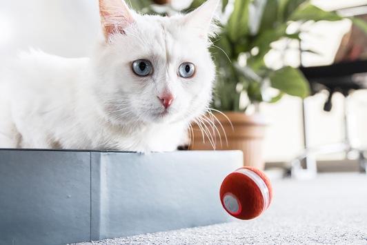 Außergewöhnliches Katzenspielzeug gegen Langeweile – neues Upgrade begeistert