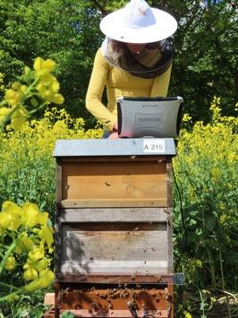"""Frühwarnsystem zum Schutz der Honigbiene / DBU-Projekt """"BeeCheck""""- Weltbienentag am 20. Mai"""