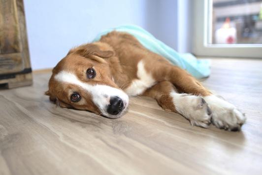 Epilepsie: Gewitter im Kopf / Die Epilepsie ist eine schwere Erkrankung bei – ansonsten gesund wirkenden – Hunden